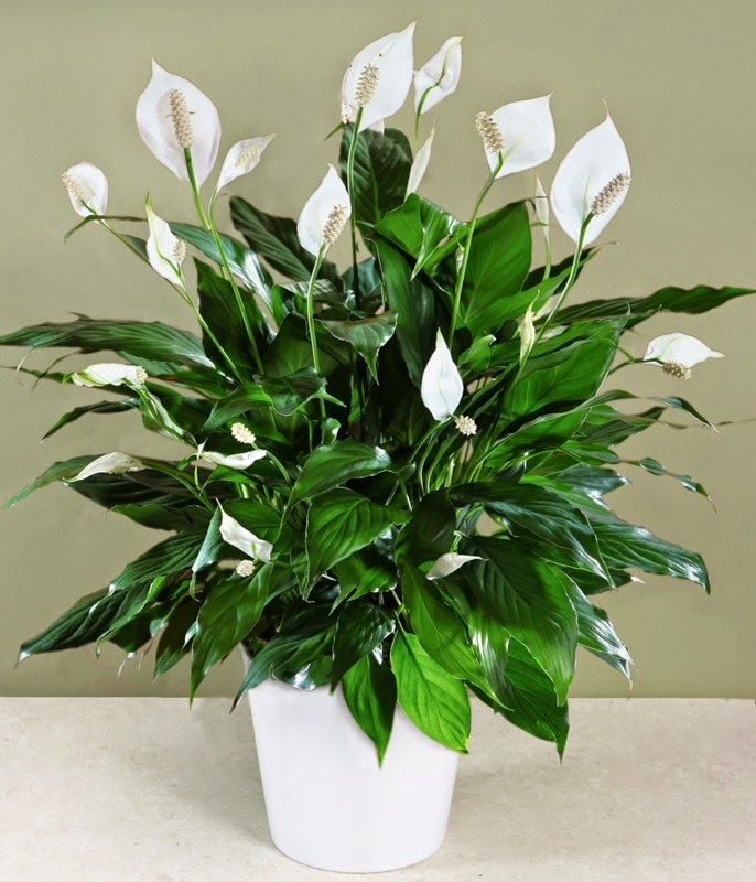 Photo of 5 flori uşor de îngrijit în casă