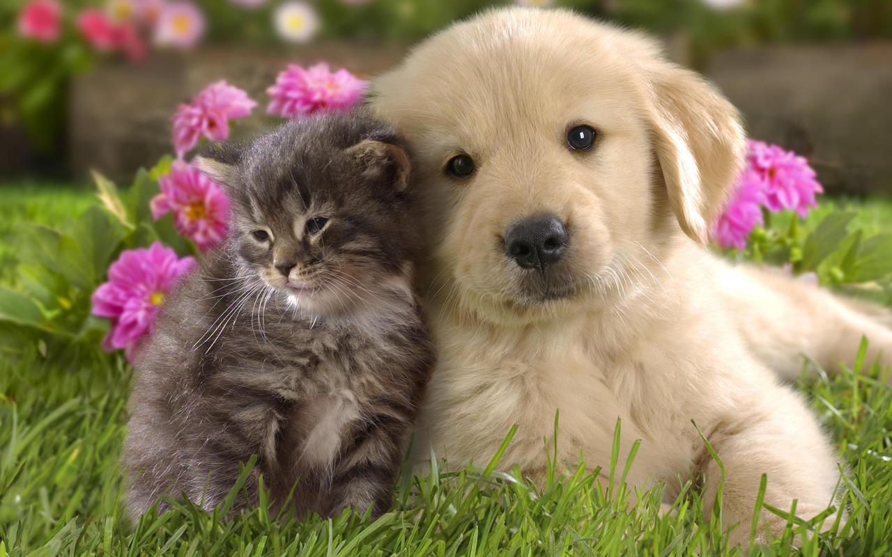 Photo of Sfaturi pentru îngrijirea animalelor de companie