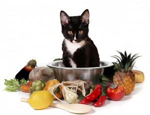 cat-food-650x499