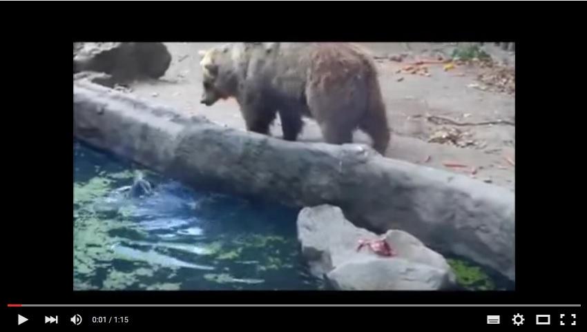 Eroul urs