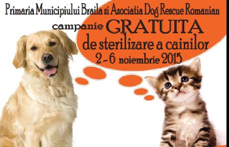 Campanie gratuită de sterilizare a câinilor