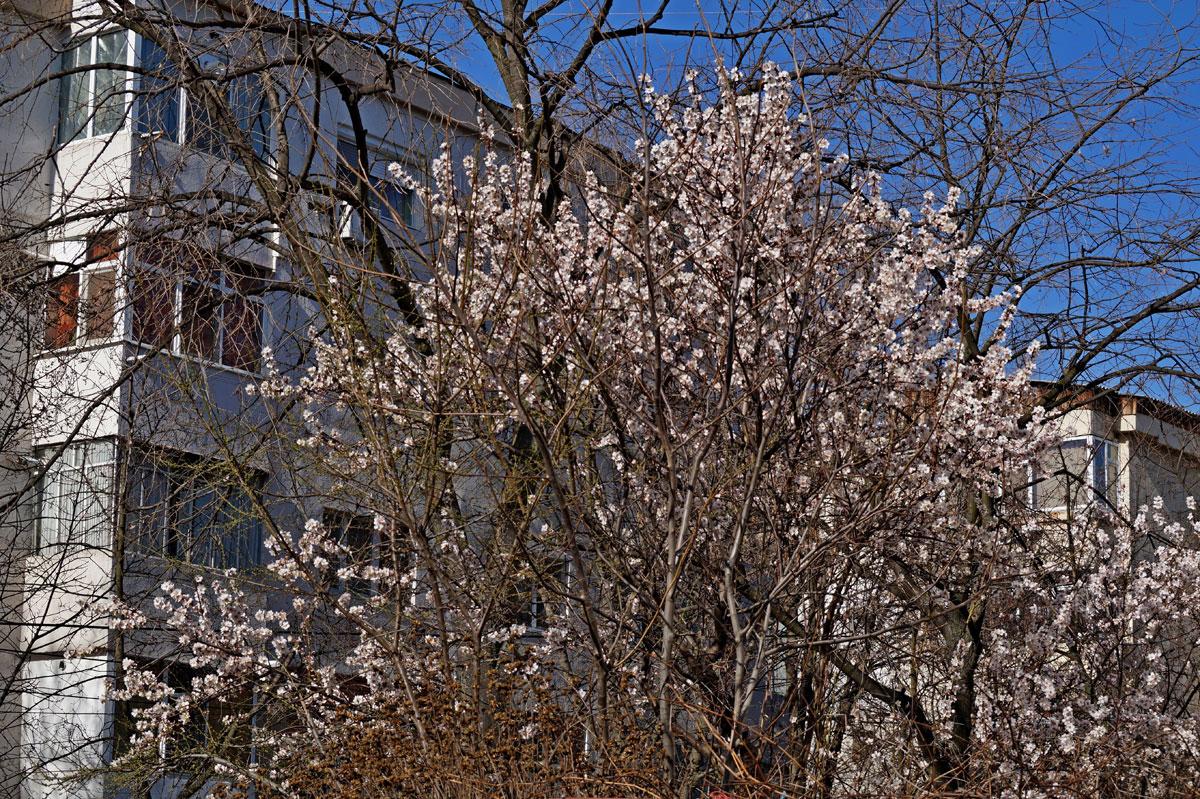 Început de primăvară în Brăila cu Dl. Nicu Iorga