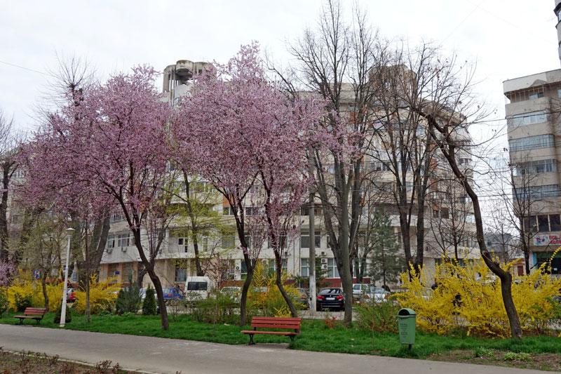 Primăvara în Brăila, surprinsă de Dl. Nicu Iorga