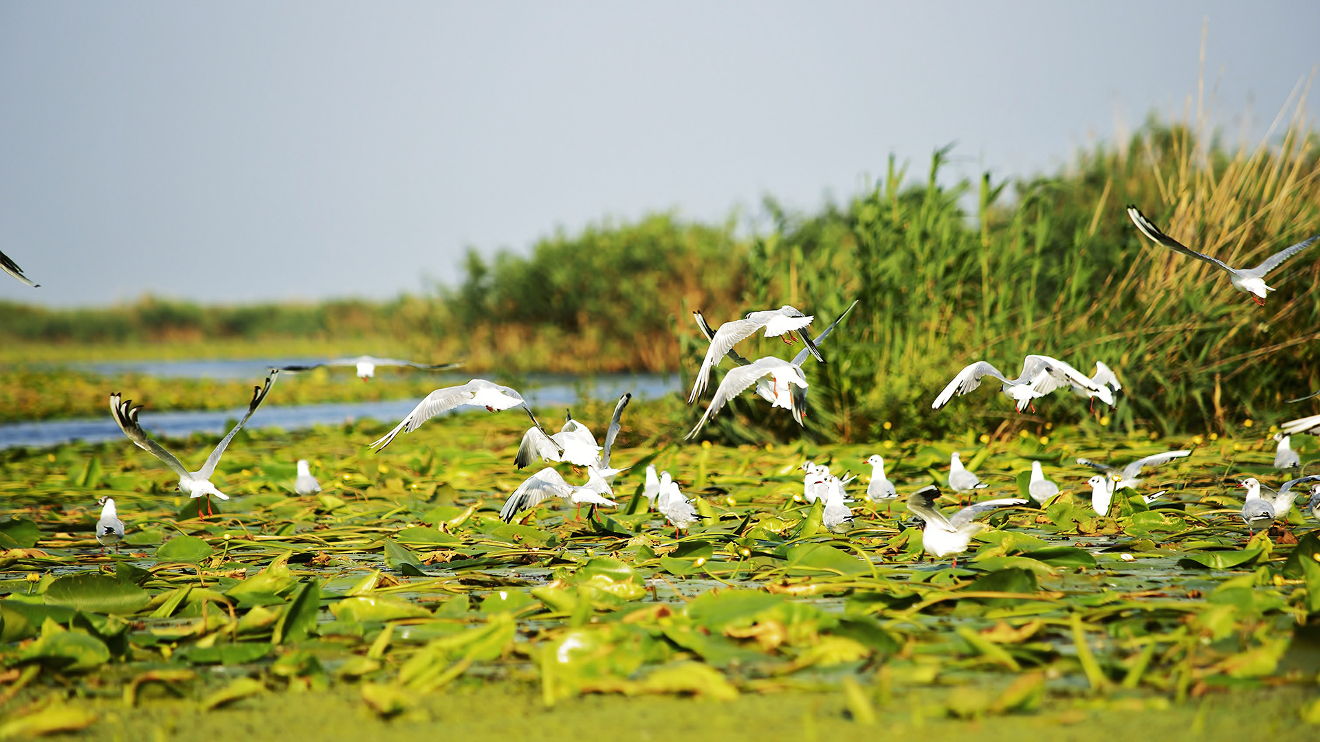 Photo of Se vinde din Deltă – Profitable investment in Danube Delta Romania!