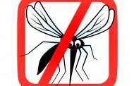 Campanie de combatere a țânțarilor în Brăila